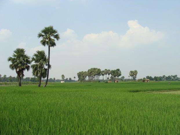 Inde : la révolution agricole