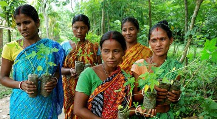 L'Inde sur la route de l'écoféminisme ?