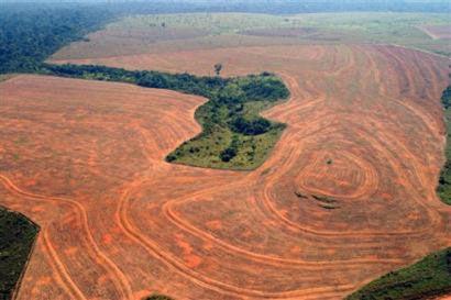 La déforestation en hausse de 88% au Brésil !