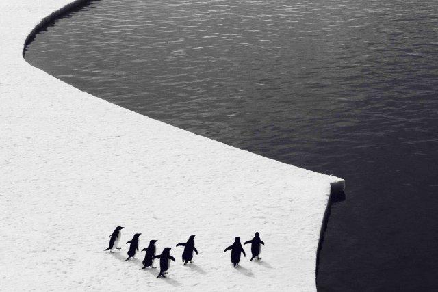 Quelqu'un pour sauver l'Antarctique ?