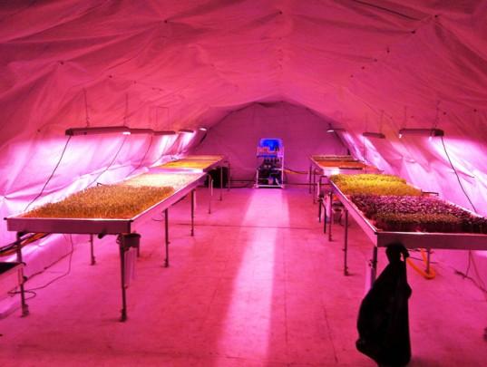 Growing-Underground-London-Farm-537x405