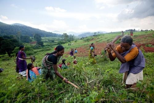 Livelihoods : faire de l'environnement une richesse