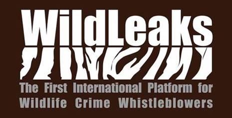 WildLeaks, la première plateforme internationale pour les lanceurs d'alerte de l'environnement