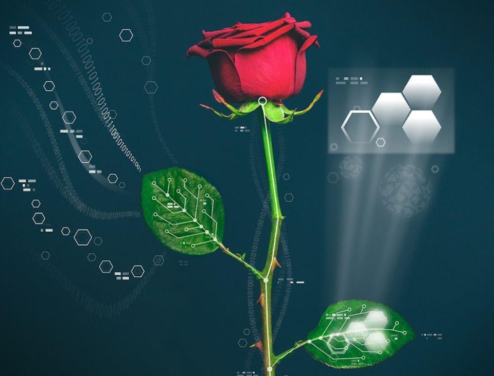 Voici la rosebot' : mi rose, mi robot !