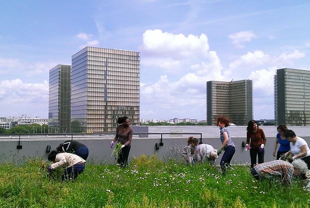 potager et agriculture sur les toits de Paris