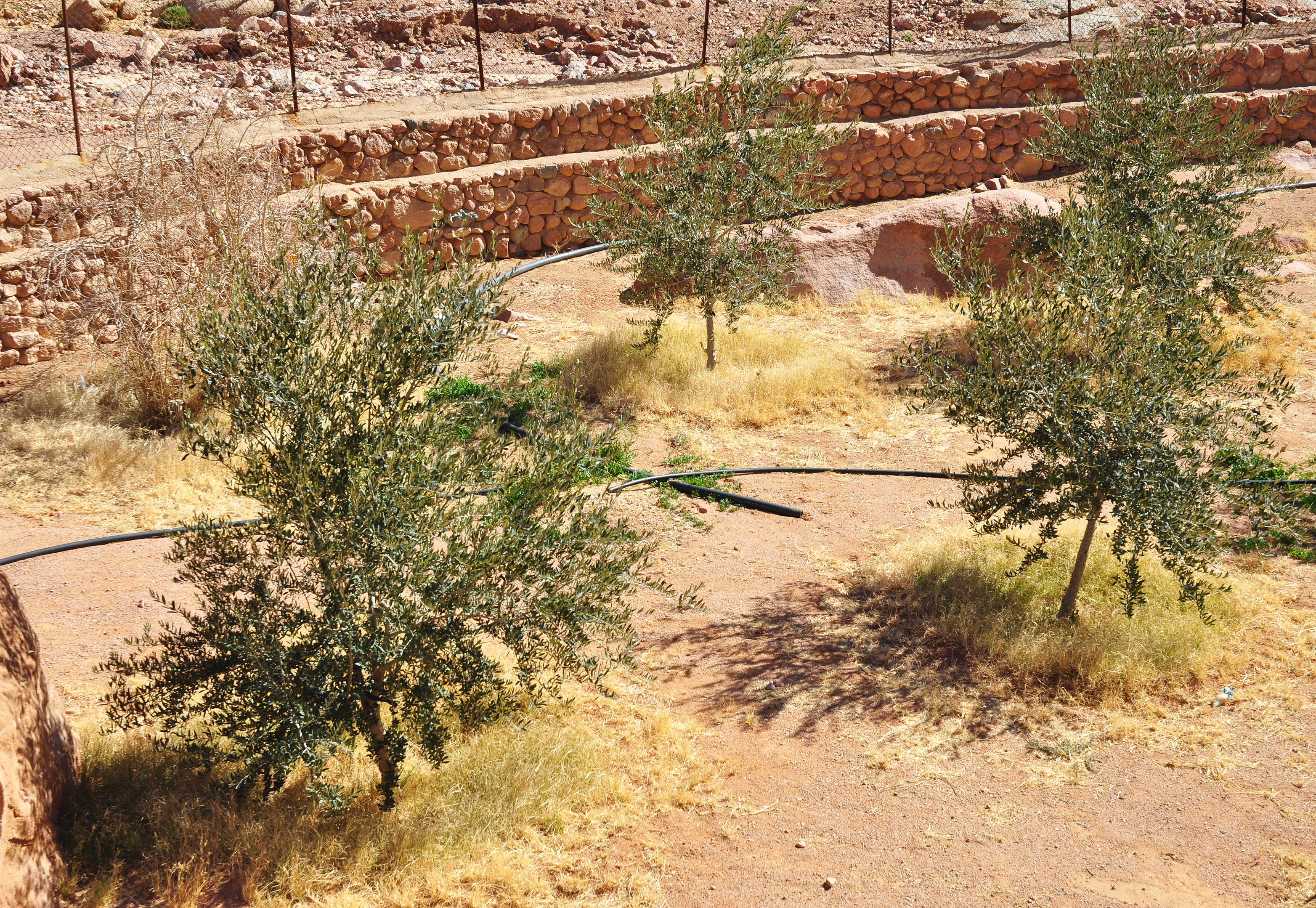 Une oasis dans le désert