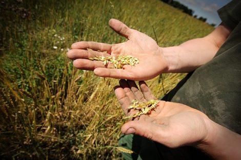 FarmErasmus : l'école européenne du bio !