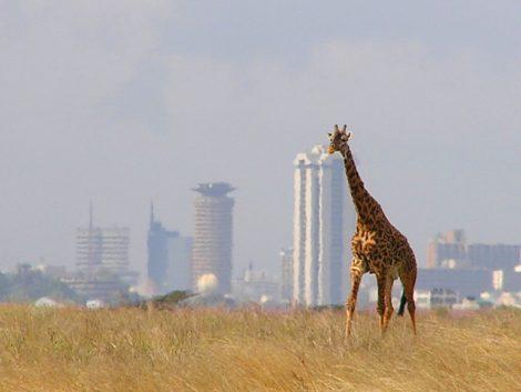 Nairobi : objectif smart city !
