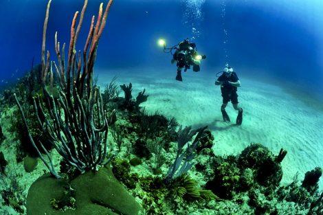Thalatoo : un hologramme sous les mers