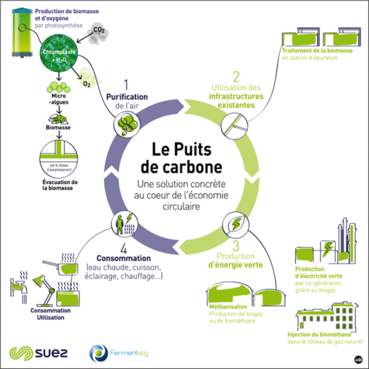 le bioreacteur de microalgues : un projet d'économie circulaire