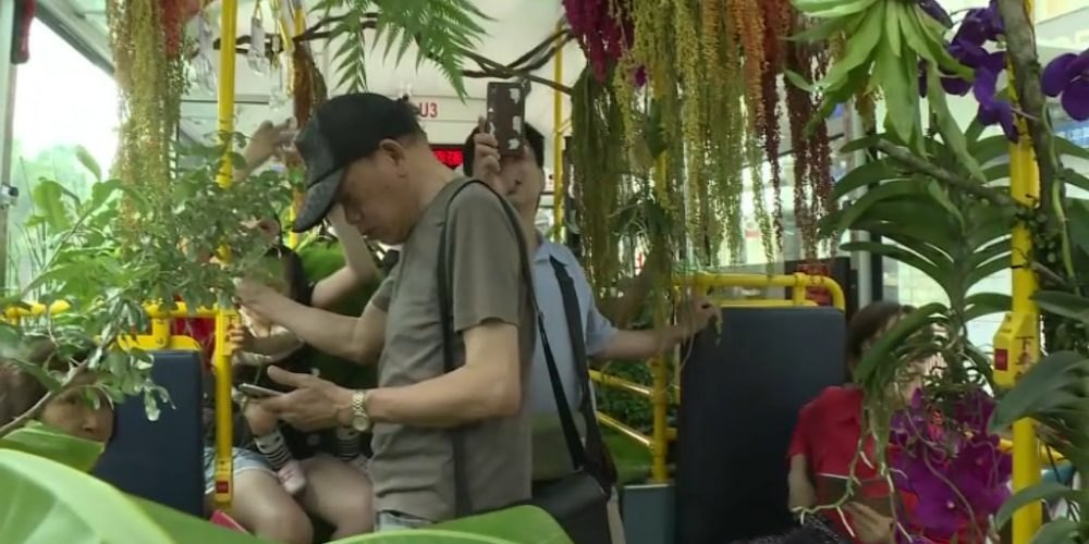 Un bus forêt à Taïwan