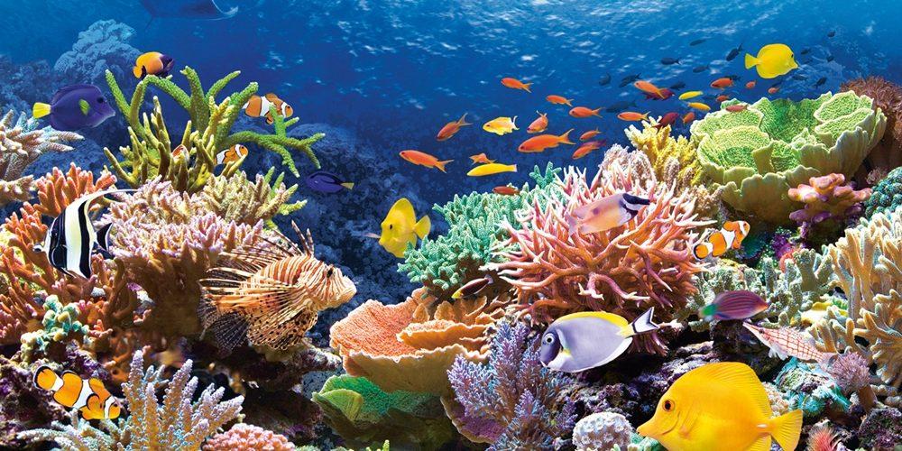 Super-coraux VS changement climatique