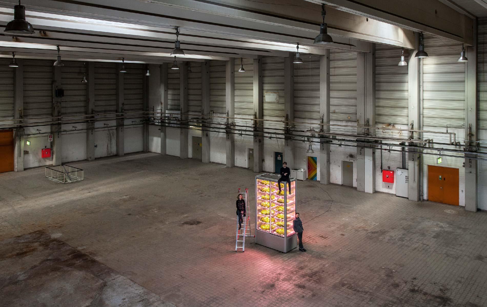 startup allemande de serres verticales en hydroponie