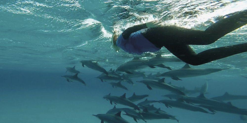 Contre l'anxiété, nagez avec des dauphins virtuels