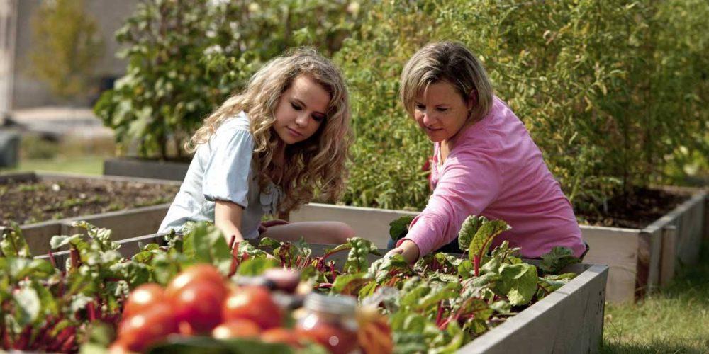 Toulouse : une startup lance le co-jardinage