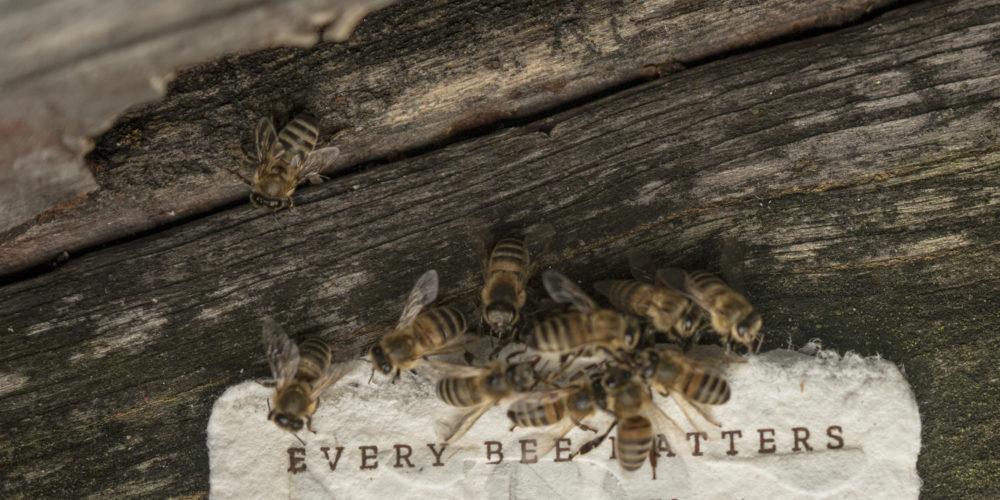 Un emballage biodégradable pour sauver les abeilles