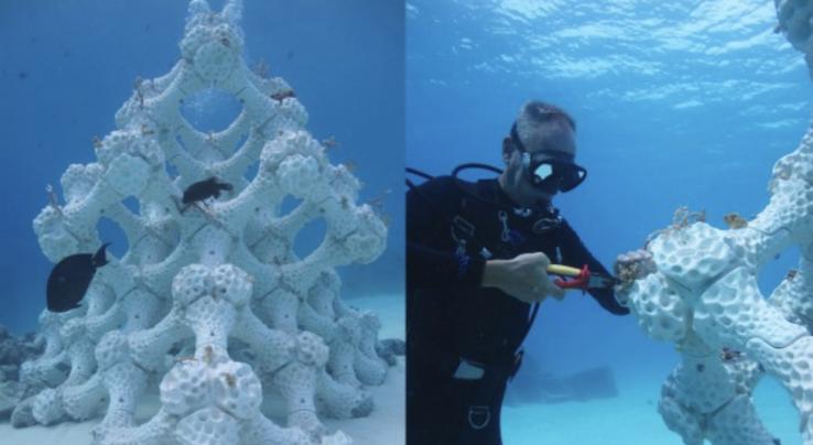 Imprimer des récifs en 3D pour créer de nouveaux abris marins