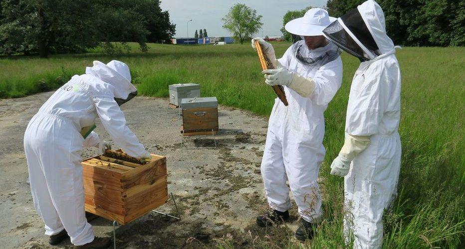 Quand les abeilles bzz près des entrepôts