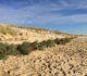 Île de Ré : des sapins recyclés pour la préservation des dunes