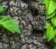 Cleantech open France : un concours pour faire pousser les entreprises en herbe