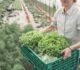 Covid-19 : La Région Bretagne lance une plateforme de livraison de produits locaux