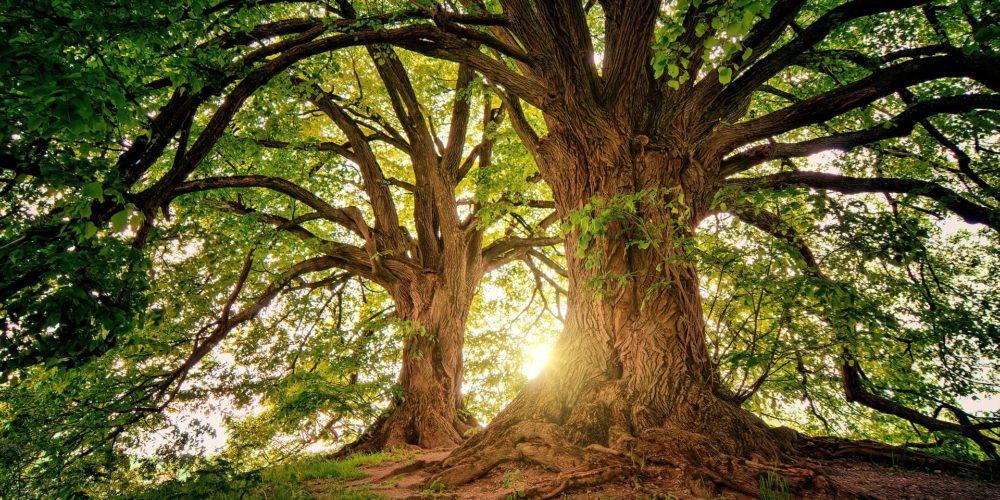 Vous aimez votre forêt ? Partagez son ambiance sonore !